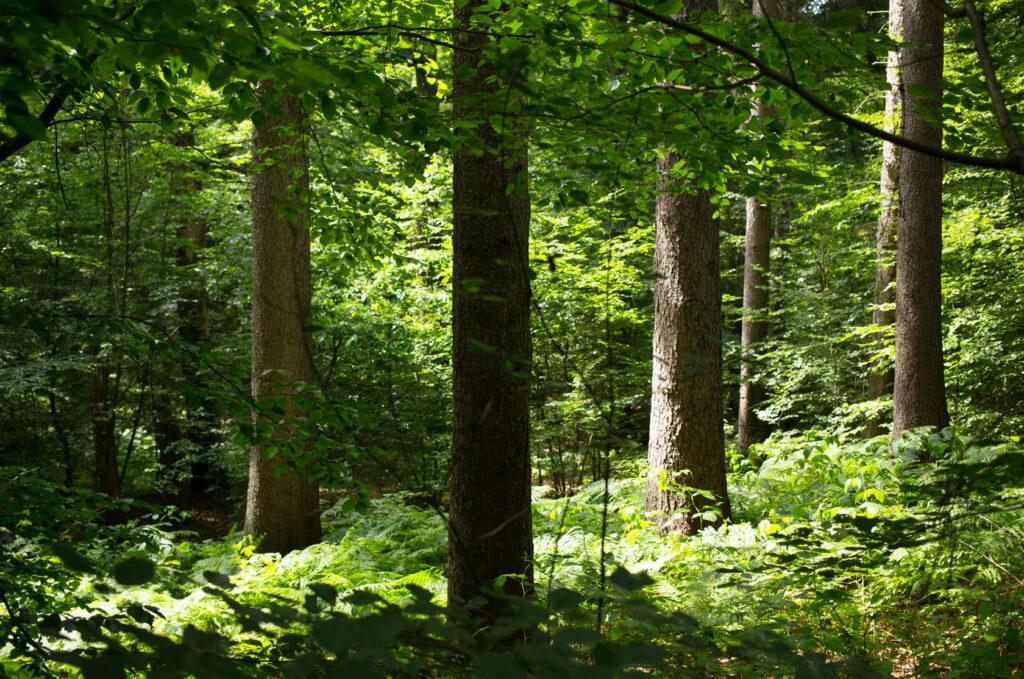 Mimameid Waldbaden Wald